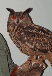 Bill Robinson's Birds of Prey