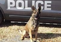 "FCPD K9 Lex in the running for ""K9 of the Year"""