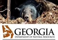 featured bearwise DNR