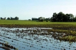 Heavy rains further delay crop progress