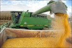 Harvest Off to a Healthy Start in Illinois