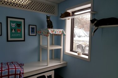 Homeward Bound Cat Room