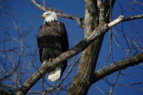 LISTEN: Riley Adams of Ameren Illinois Talks Avian Protection Program