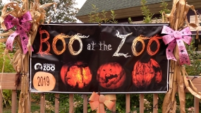 WATCH: Charlie 10 – Boo at the Zoo
