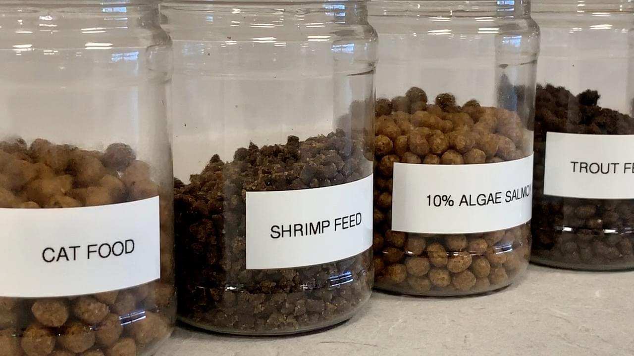 ADM Animal Nutrition