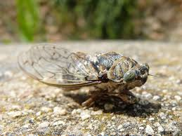 Summer Season Soon to be Cicada Season