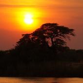 ALL Humans Originated from Botswana?