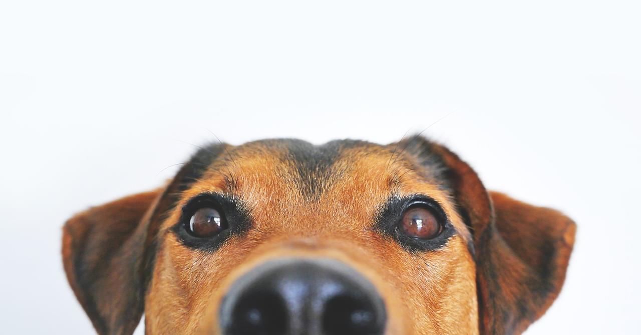 dog-838281_1280