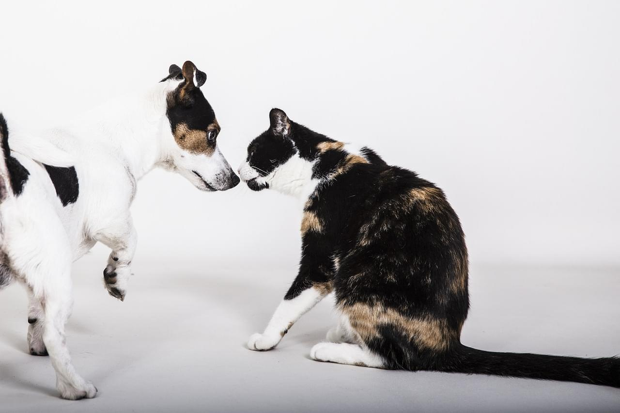 dog and cat-4364620_1280