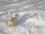 Watch Cat Attempt to Catch Snowflakes