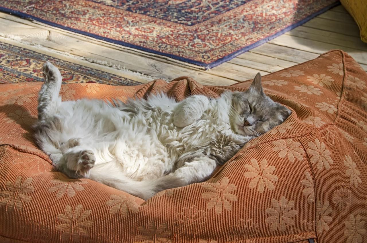 sleeping-cat-4764742_1280