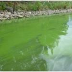 Health Dept. Issues Warning on Blue-Green Algae