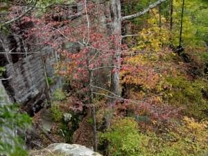 Shawnee National Forest Closes All Offices, Campgrounds and Restrooms