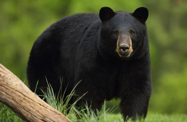 IDNR warns people to stay bear aware