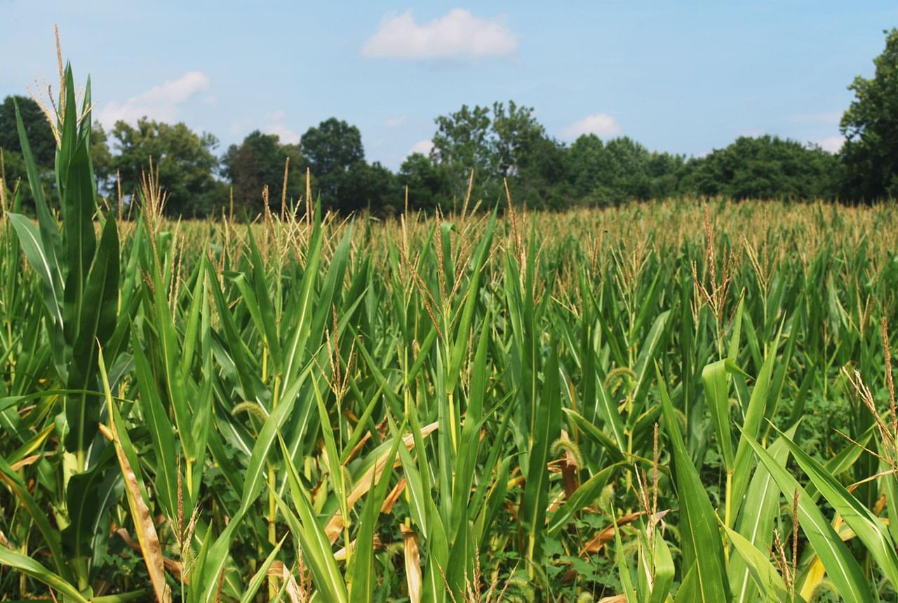 Recent Rains Putting a Damper on Crop Progress