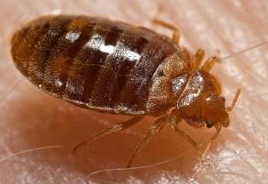 Marion High School Cancels Wed. Classes for Bed Bug Inspection