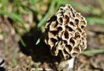 U of I Extension expert talks mushroom season