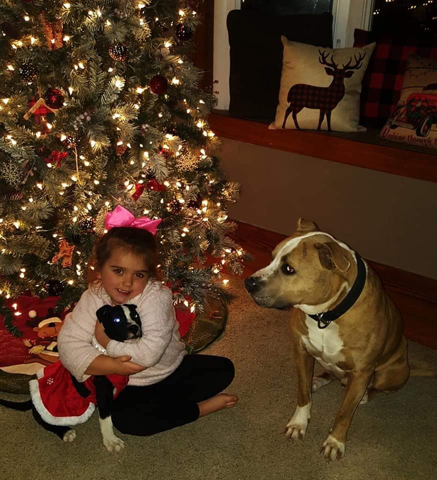 Nashville Family Says Washington County Sheriff's Deputy Shot, Killed Family Dogs